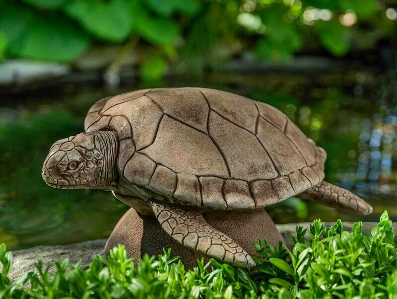 Large Sea Turtle (CB)