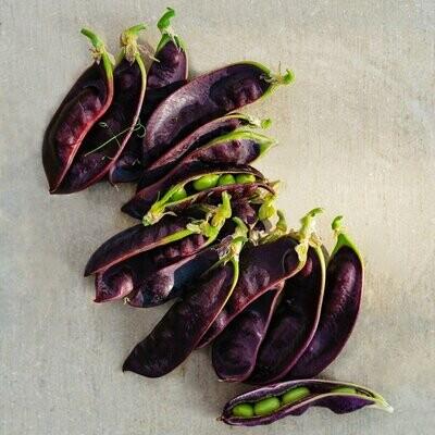 Pea Snow Pea Purple Seed