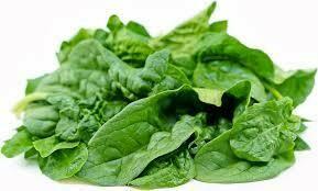 Spinach Savoyed Leaf Bloomsdale Seed