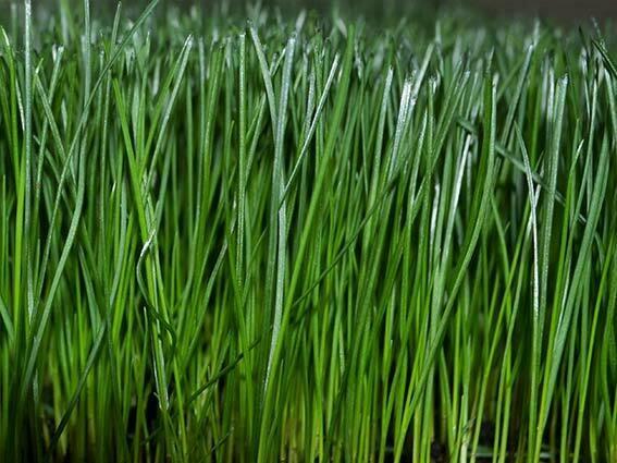 Lebanon Sun & Shade Grass Seed - 25 lbs