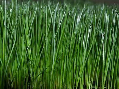 Lebanon Sun & Shade Grass Seed - 50 lbs