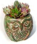 """Owl Mini Planter 5"""""""