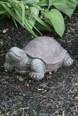 "7"" Small Tortoise (73)"