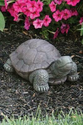 "8"" Small Tortoise  (73)"