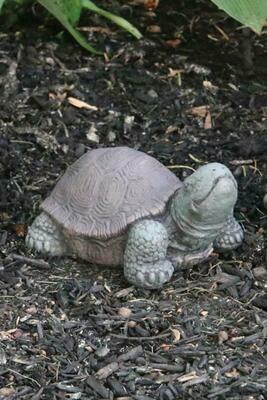 "5"" Extra Small Tortoise (73)"