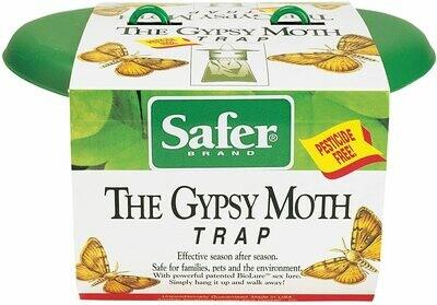 Gypsy Moth Trap