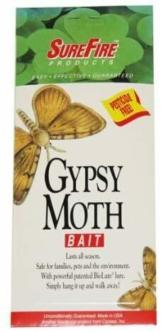 Gypsy Moth Bait