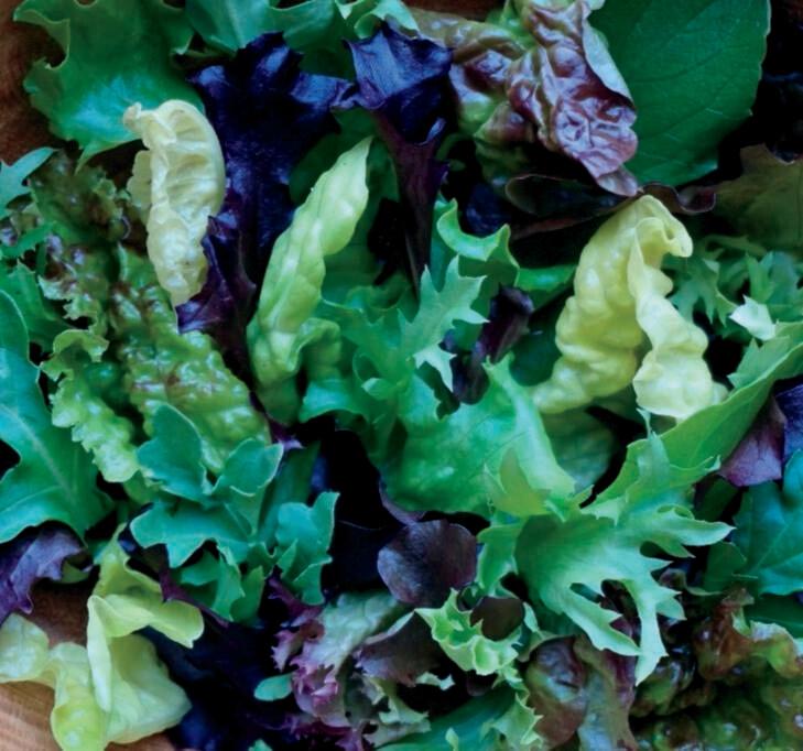 Mesclun Provence Style Organic Seed
