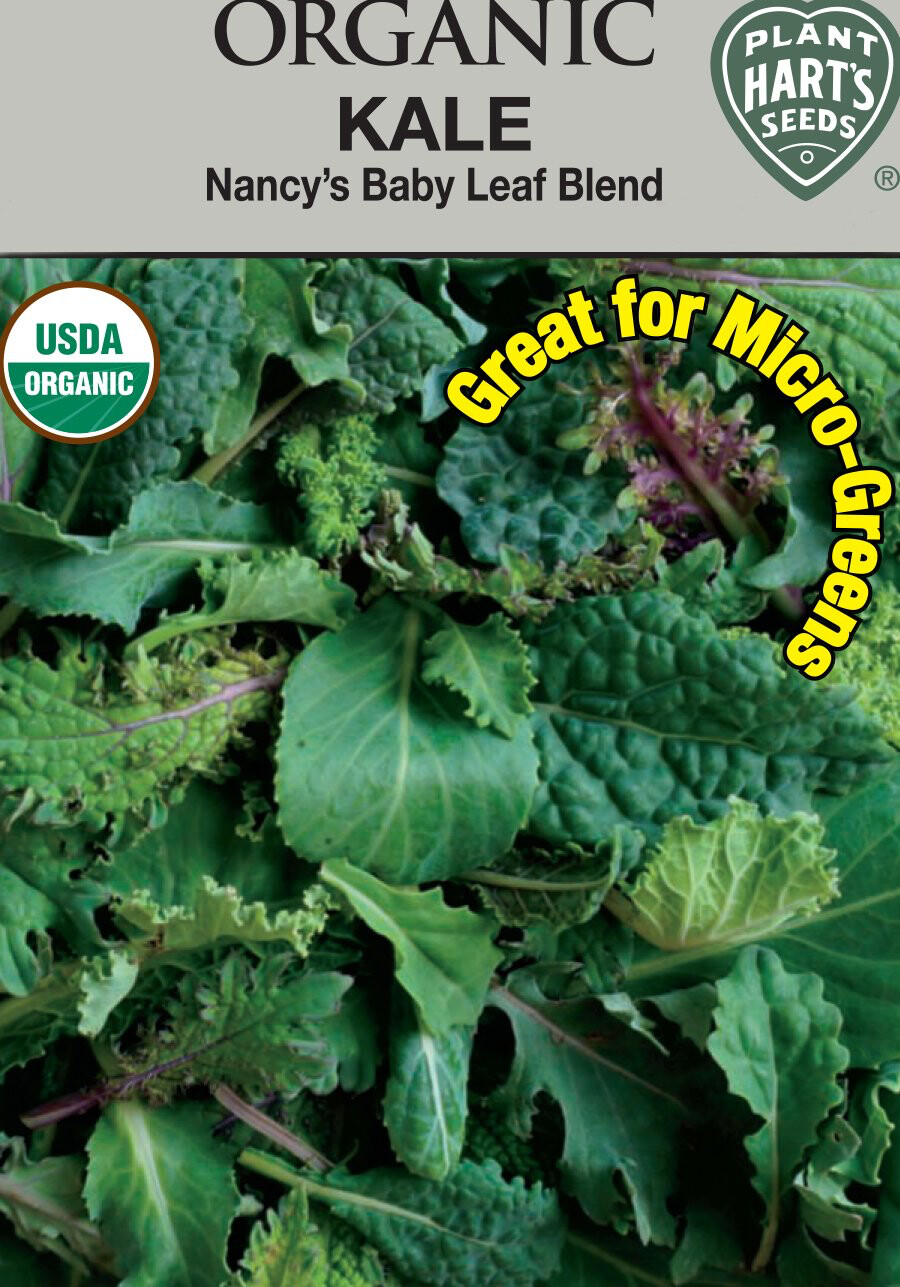 Kale Nancy's Baby Leaf Blend Organic Seed