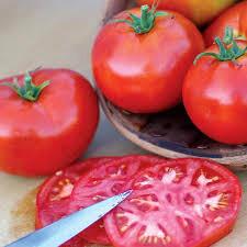 Tomato Burbank Slicing Organic Seed