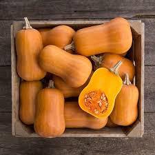 Squash Honeynut Organic Seed