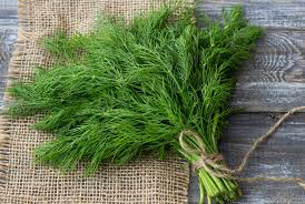 Dill Bouquet Seed