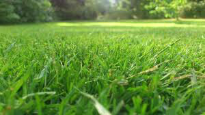 Sun and Shade Grass Seed - 2 lb