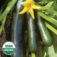 Squash Fordhook Zucchini Organic Seed