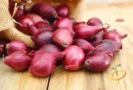 Onion Dutch Red Sets qty. 75 non gmo