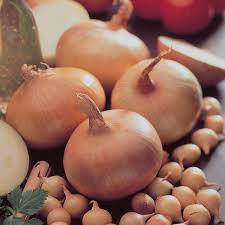 Onion Stuttgarter Yellow Sets qty.100 non gmo