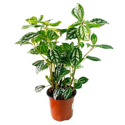 Aluminum Plant 4.5