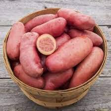 Potato 'French Fingerling' Bulbs