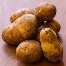 Potato 'Russet Burbank' Bulbs