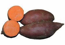 Sweet Potato 'Burgundy' 1 Bulb