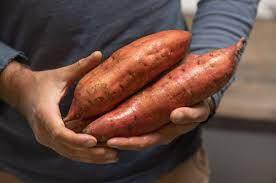 Sweet Potato 'Covington' 1 Bulb