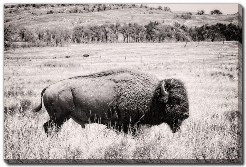 Canvas - BW Buffalo