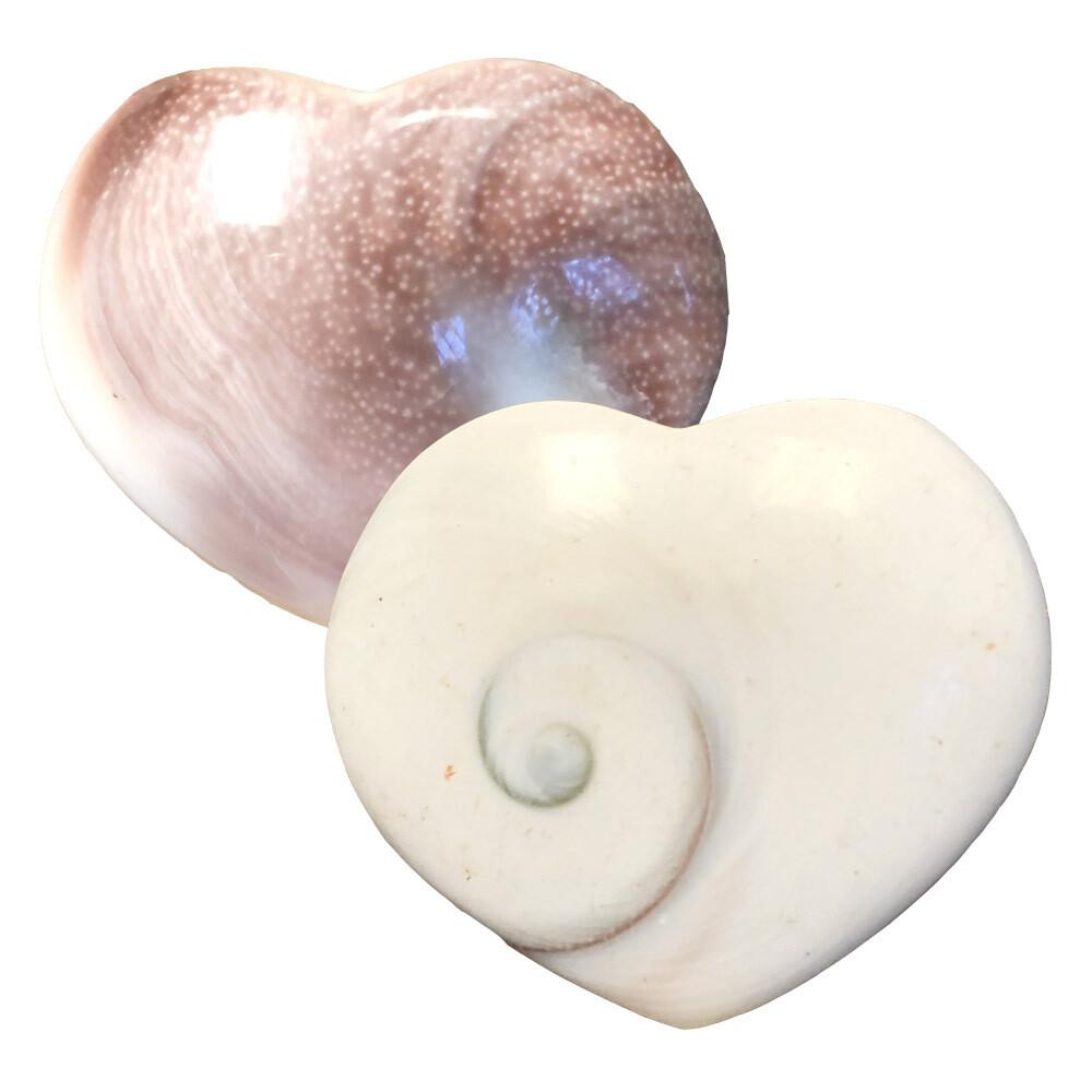 Shiva Shell Hearts