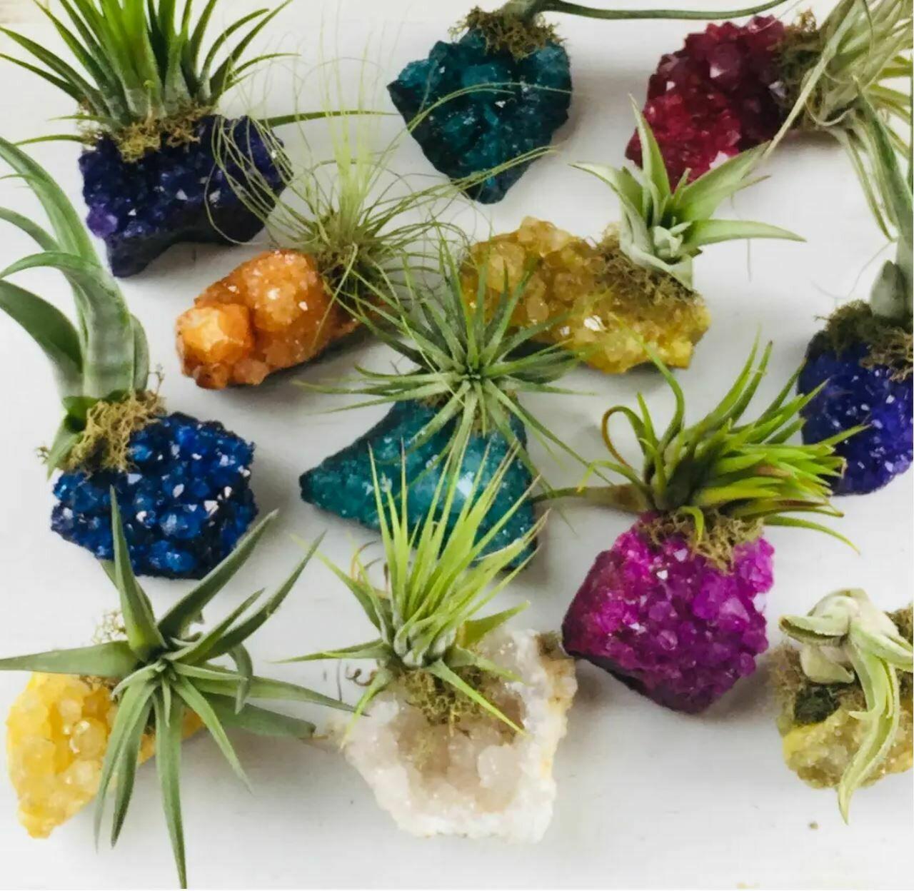 Crystal Air Plants -Druzy Crystal Clusters