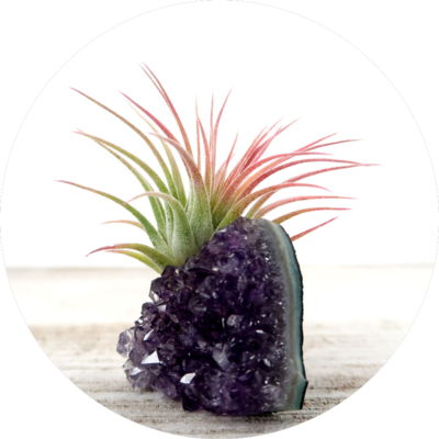 Amethyst Intuition Air Plant Druzy Crystal