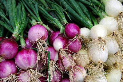 Onion Diversity Bundle
