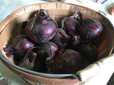 Red Onion - 5 Lb. Bag