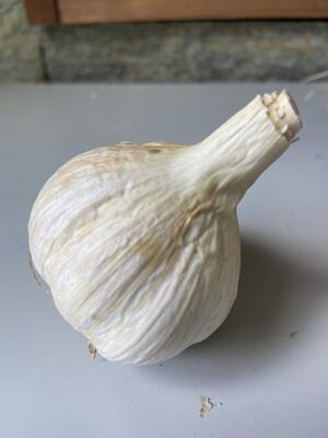 Garlic - Seed - Per Pound