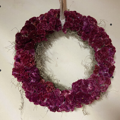 Burgundy Celosia Dried Flower Wreath