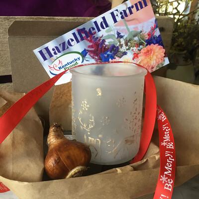 Paperwhite Narcissus Gift Box