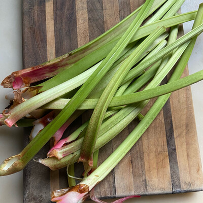 Rhubarb- Fresh Stalks