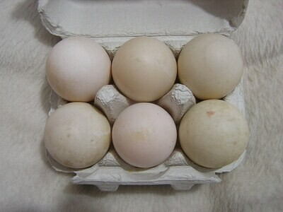 6 Local Duck Eggs