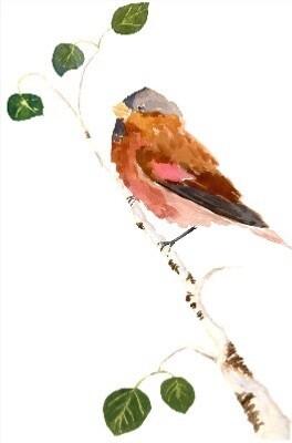 Nature Journaling: Birds