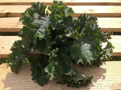 Botte de kale rouge