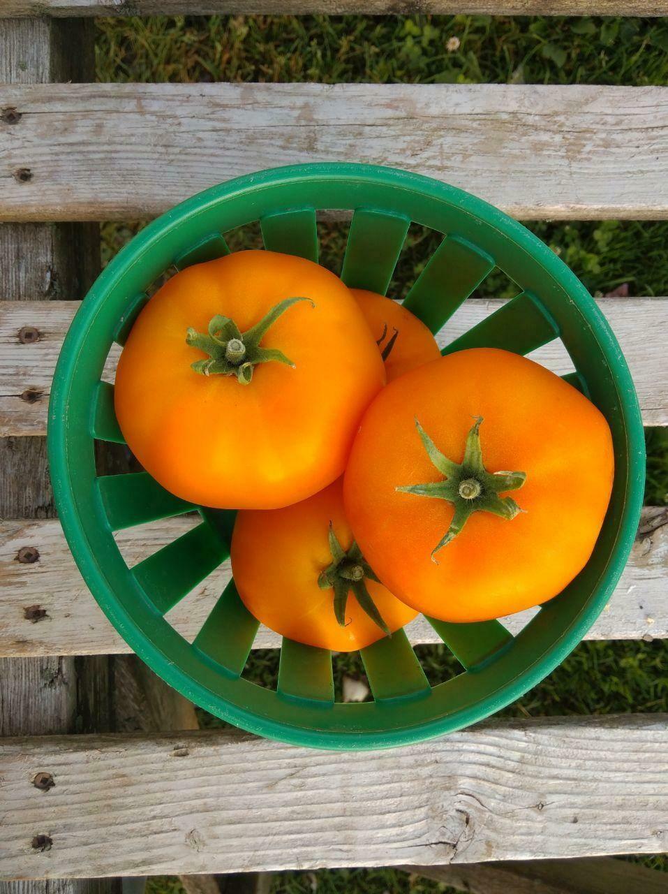 2lbs Tomates beef orange