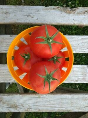 2lb Tomates beef rouge