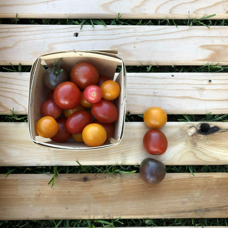 Tomates cerises de champs