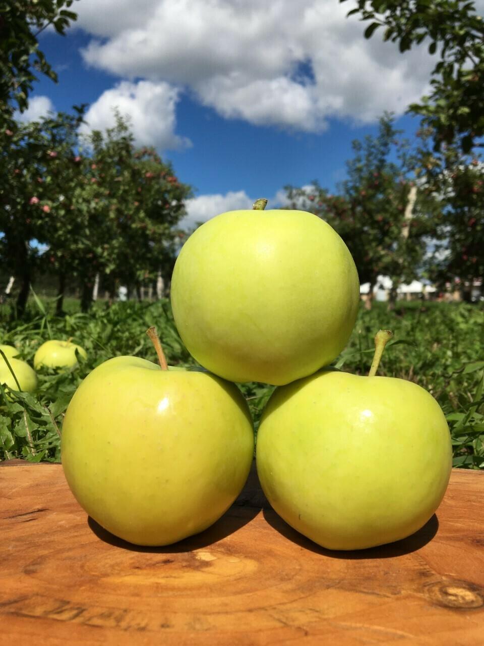 Pommes Gingergold