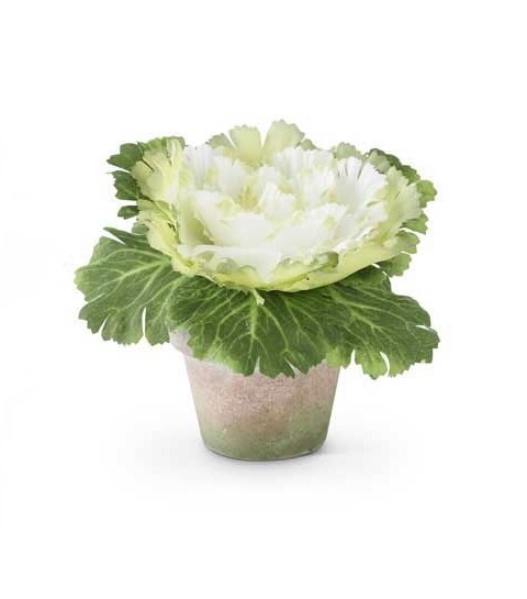Cabbage in pot white