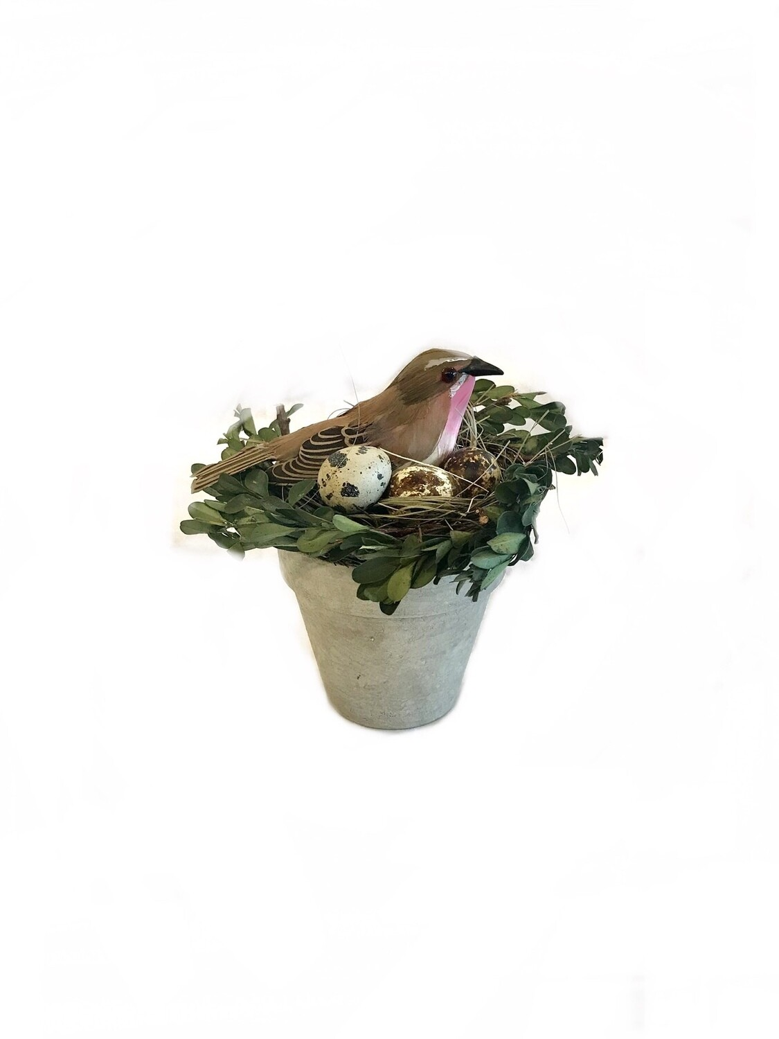 6 inch boxwood and grass nest in pot with bird
