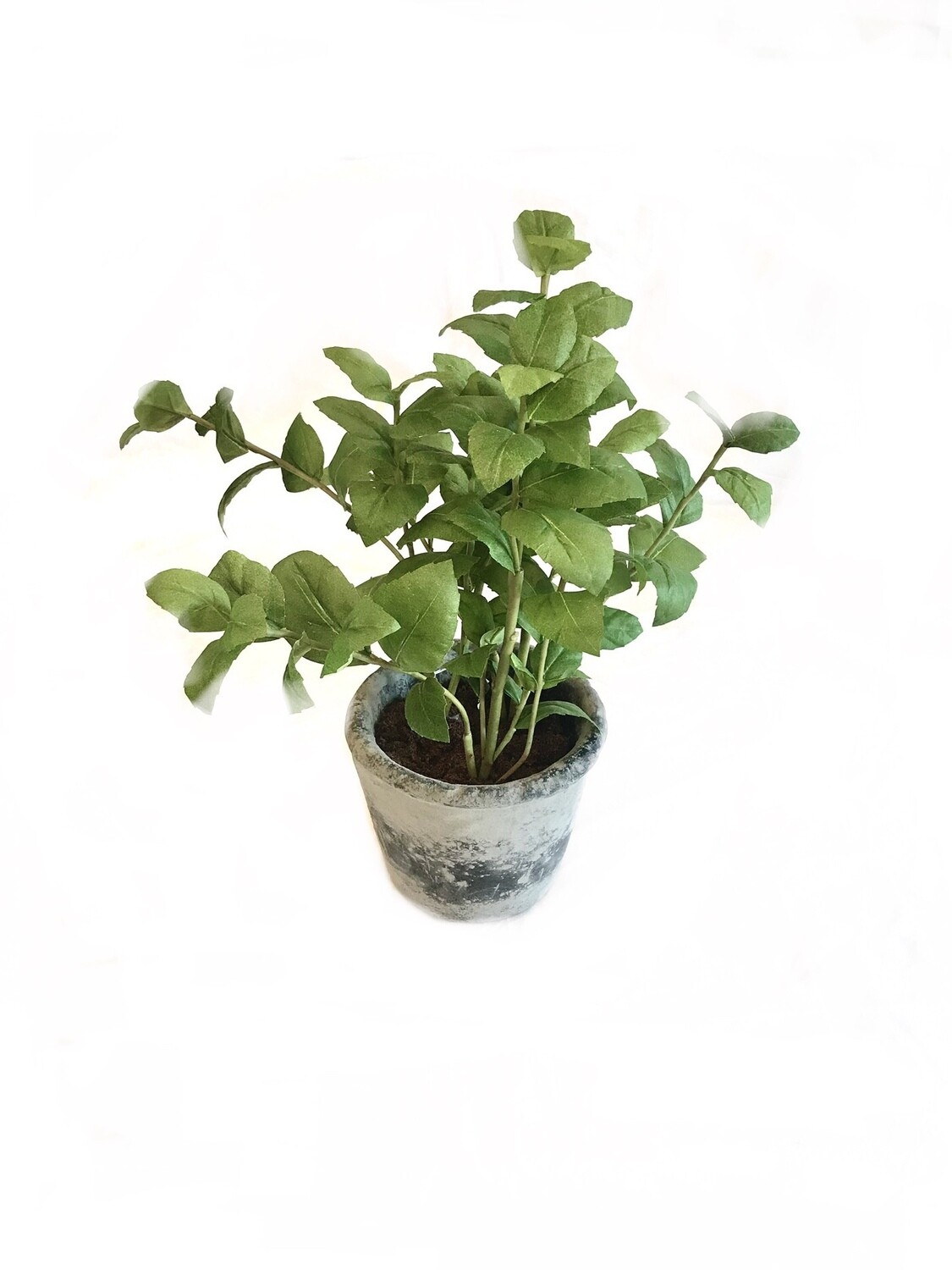 Potted herb large Basil
