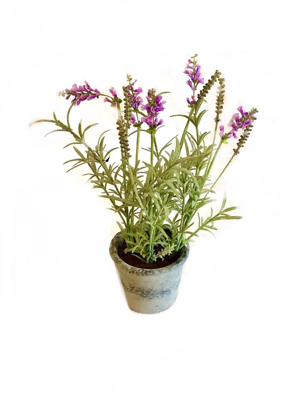 Potted herb large Lavender