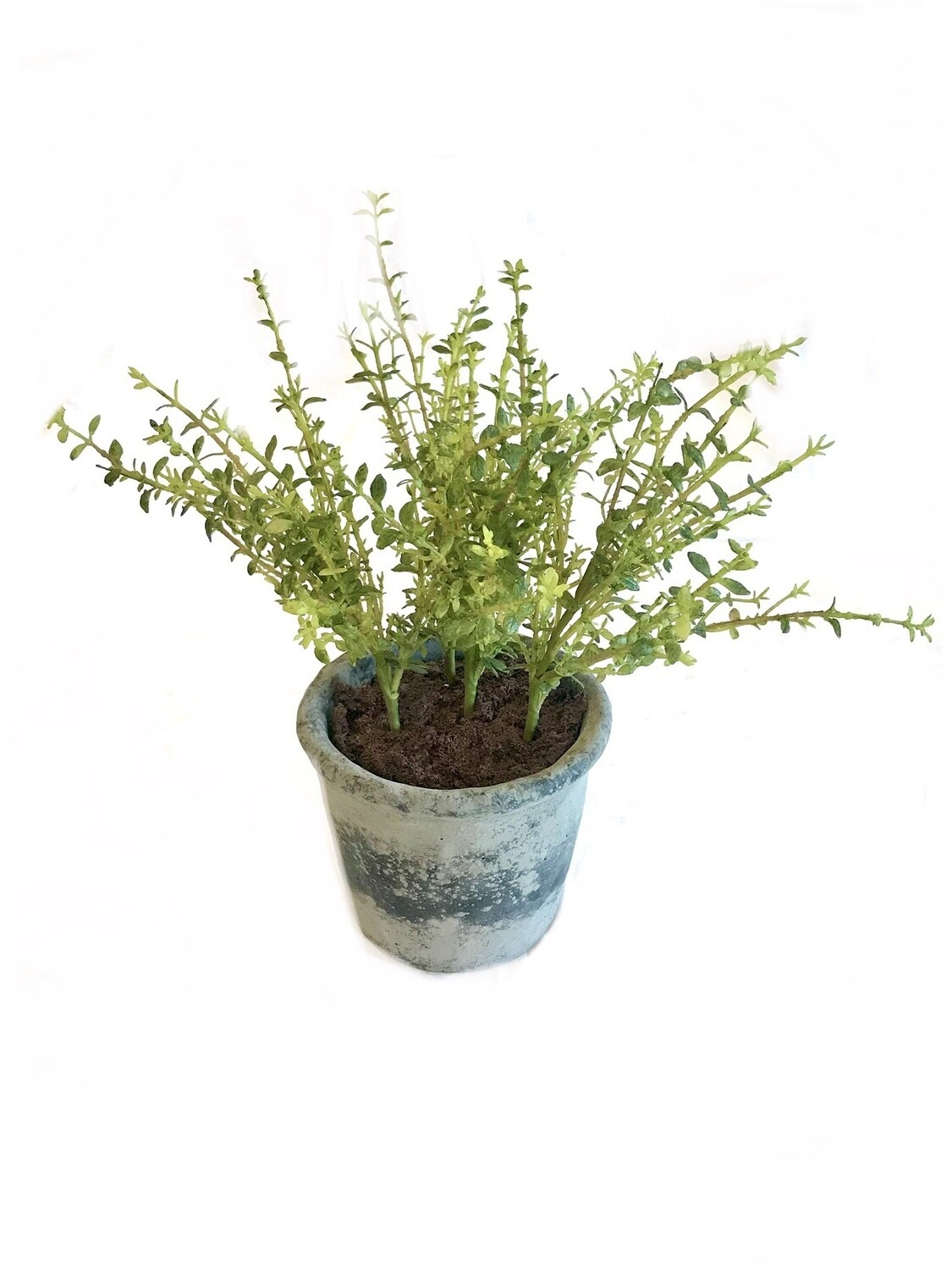 Potted herb large Thyme