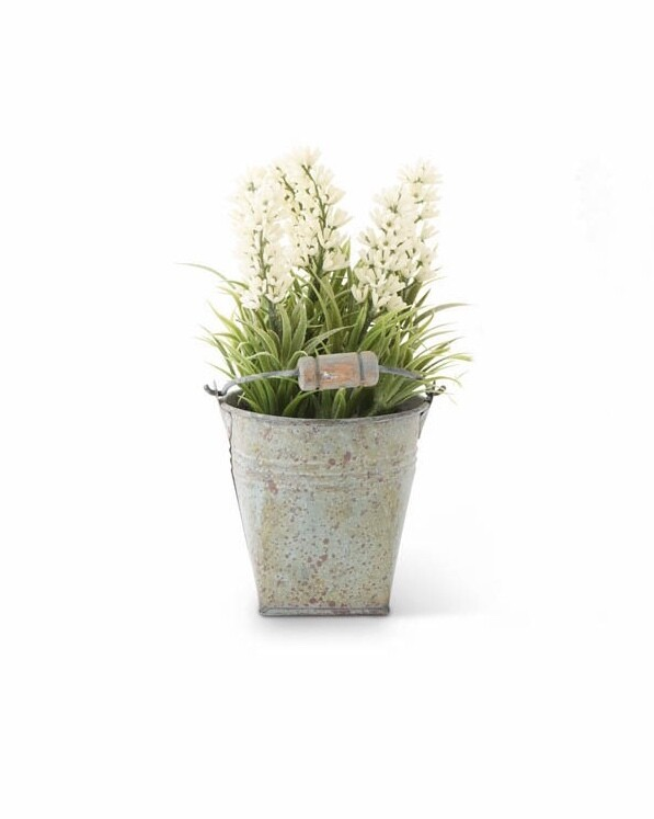 Lavender in tin bucket white
