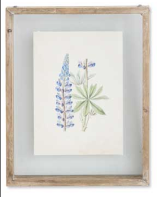 10 inch botanical print in shadow box D