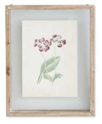 10 inch botanical print in shadow box E
